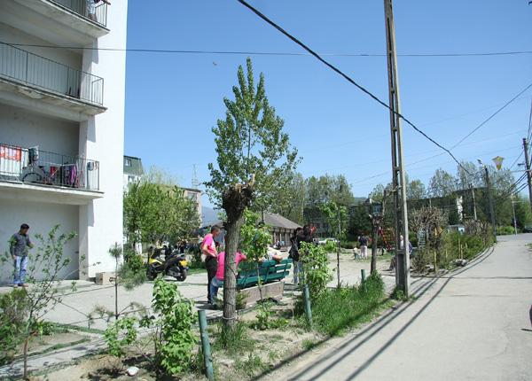 tiganii-se-muta02x