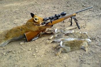 fox_hunting