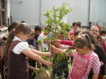 Plantari de pomi la o scoala din Satu Mare
