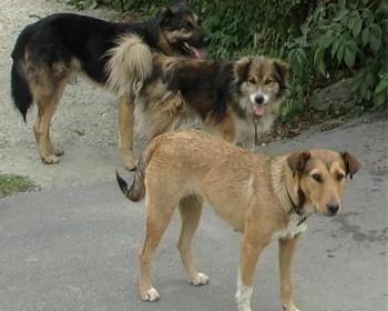 Problema câinilor aşteaptă un verdict