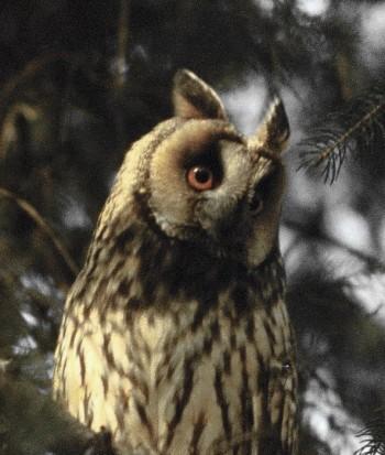 13 dintre colonii au fost identificate de ornitologi, iar şapte de cititorii Informaţia Zilei