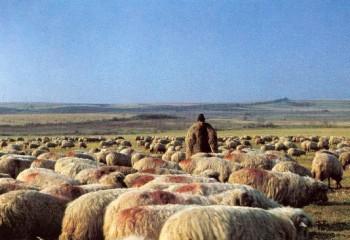 cioban-turma-oi