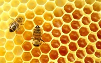 Fagure cu miere proaspata