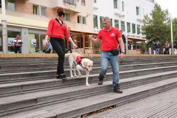"""Asociaţia """"Angel Dog"""" e implicată într-un proiect pentru pregătirea câinilor ghizi pentru nevăzători."""