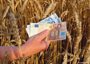 Din 2015 subventiile la hectar vor fi date in functie de suprafata de teren agricol detinuta