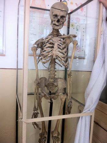 schelet-uman-scoala-pucheni-mosneni