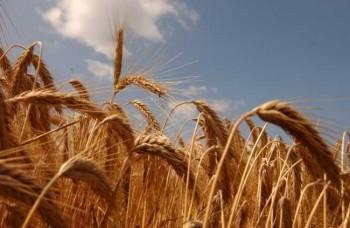 Romania a inregistrat uedent in comertul cu produse agroalimentare