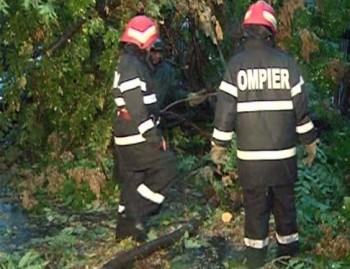 pompierii intervin la copacii deborati de vijelie
