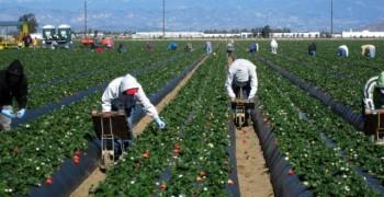 Fermierii au solicitat subventii europene pentru 8.4 milioane de hectare de teren