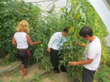 Anul trecut, printr-o iniţiativă demarată în cadrul Proiectului ''Start pentru incluziune socială prin muncă'', tinerii străzii au început activitatea în grădinile şi solariile Asociaţiei Stea