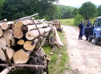 furt de lemne interceptat de jandarmi