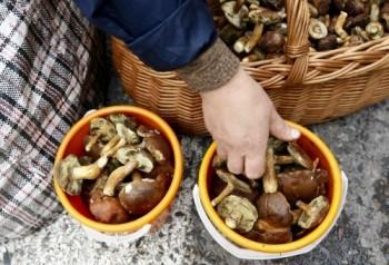 Un tânăr a ajuns la Urgenţă cu intoxicaţie cu ciuperci