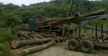 Masa lemnoasa din fondul forestier public va putea fi valorificata pe bursa