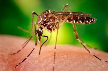 Virusul Zika, o urgenţă la nivel global