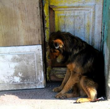 Astfel, cei care vor să ajute animalele fără stăpân, fie donând fie adoptând, sunt invitaţi luni, 4 aprilie 2016, în Piaţa 25 Octombrie, în Pasajul Corneliu Coposu din municipiul Satu Mare, la Târgul de adopţie a animalelor, cu începere de la ora 12.30