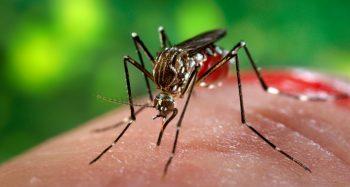 Şase români au decedat în urma infecţiei cu virusul West Nile