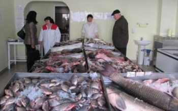 Romania importa anual peste 80.000 de tone de peste deoarece capacitatea de productie autohtona este de 30.000 de tone