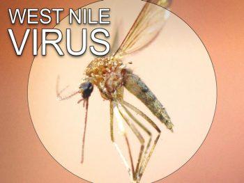 west-nile-virus