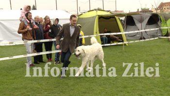 La expozitia de câini din week-end, stadionul Someşul a fost lună şi bec