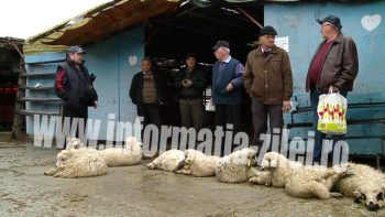 Pretul mieilor s-a stabilizat in Satu Mare