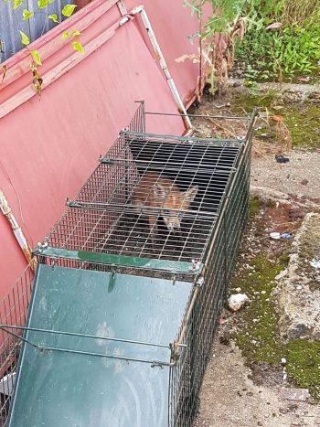 În curtea unei societăţi comerciale din zonă, angajaţii au ajuns să facă slalom printre vulpi
