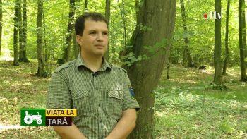 Cionca-Garda Forestiera