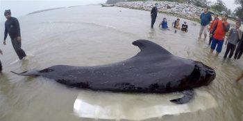 Balena înecată cu plastic