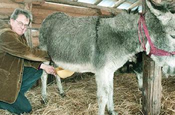 Ferma de magarite se numara printre cele mai rentabile afaceri