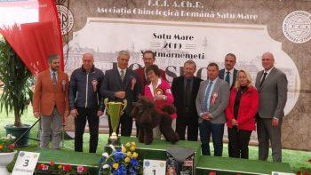 Un Pudel din Slovacia a câştigat titlul de cel mai frumos câine din cele două zile de expoziţii canine de la Satu Mare
