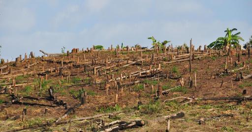 Peste 1.050 de dosare penale pentru tăieri ilegale de lemn ...